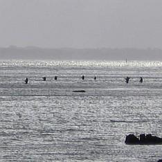 Rücksicht nehmen beim Meerforellenfischen